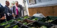 Szeged, Visszatérhetnek élőhelyükre a csempészektől lefoglalt görög teknősök, 2015.07.14.